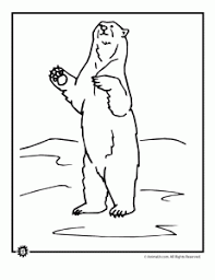 bear coloring pages animal jr