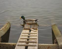 where can i buy duck duck r greaves buy rent sell boston