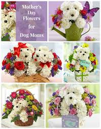 mother u0027s day flowers for dog lovers coupon codes and discounts