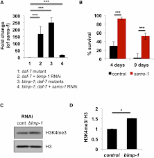 blimp 1 blmp 1 and metastasis associated protein regulate stress