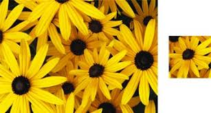 sunflower wrapping paper wrapping paper by photowrap 2