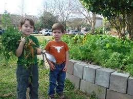 What To Plant In Spring Vegetable Garden by Houston Spring Vegetable Guide Houston Chronicle