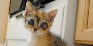 stray kitten with u201cfrog eyes u201d surprises rescuers with her amazing