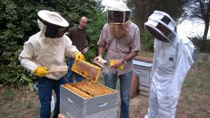 cuisine centrale albi albi les abeilles butinent pour la cuisine centrale 13 09 2012
