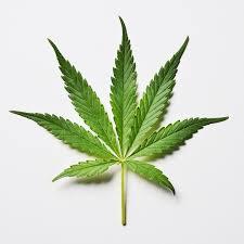 pin di twitterperlen su wortspiele 83 best science of cannabis images on accessories