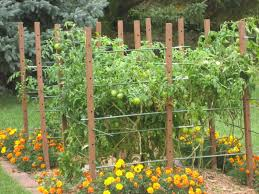 33 best images of tomato garden trellis ideas tomato cage