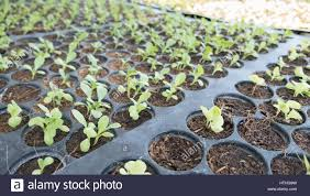 agriculture growing plants plant seedling young baby plants
