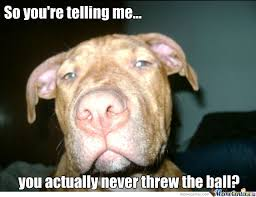 Pitbull Puppy Meme - pitbull memes image memes at relatably com