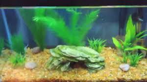 Petsmart Christmas Aquarium Decorations by Petsmart Fish Stunning Small Petsmart Haul Decorated Gallon Tank