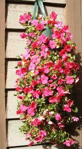 plante vivace soleil plantes retombantes à fleurs et vivaces pour un extérieur fleuri
