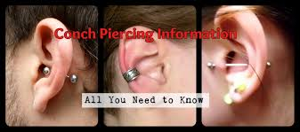 conch piercing cuff conch piercing information all you need to professional