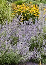 perennial plants for fall perennial flowers hgtv 16 perennial companion plants for roses perennials yards and gardens