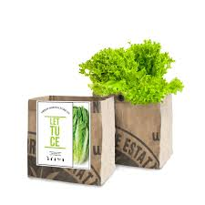 Indoor Vegetable Garden Kit by Lettuce Vegetable Garden Grow Kit From Jackson U0026 Perkins