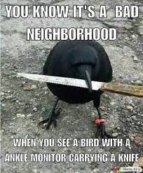 Storm Crow Meme - 713 best wolves and crows images on pinterest crows ravens