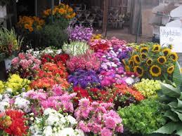 farm fresh flowers home fresh flower farm