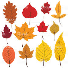 Warm Set Of Twelve Colorful Autumn Leaves In Warm Colours Stock Vector
