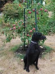 Apple Tree In My Backyard Growing Fruit In The Yard Backyard Orchard Culture Atheist Nexus