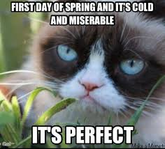 54 best grumpy cat images on pinterest cute kittens funny things