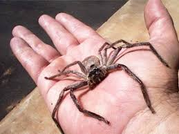 Are Spiders Attracted To Light Awesome Control Methods On How To Get Rid Of Spiders Spider