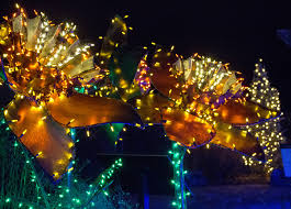 the gardens on spring creek showcases elaborate light display for