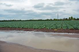 agrilife extension experts rains u0027mixed blessing u0027 for south