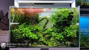 Japanese Aquascape by 60x30x36cm 64l Day 452 Aquascape By Peha68 Anubias