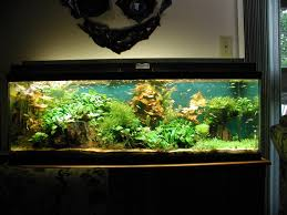 large green large modern fish tank that can decorate the interior