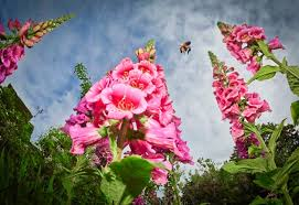 top 10 most beautiful blooming gardens in the world women