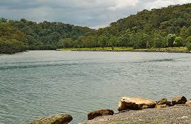 native plants nsw grey mangrove australian native plants nsw national parks