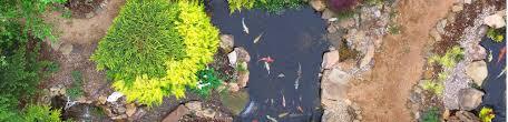 water garden ponds in oklahoma city garden ponds u0026 aquariums