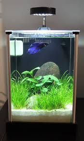 Nano Aquascaping 65 Best Aquarium Images On Pinterest Aquarium Ideas Betta Fish
