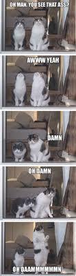 Dat Ass Cat Meme - solid logic humour hilarious and laughter