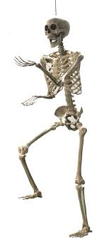 posable skeleton sized posable skeleton 5ft 329226 trendyhalloween