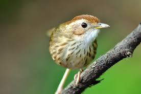 how to identify a bird in 10 easy steps wild bird blog