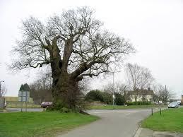 file baginton oak tree in winter 18f07 jpg wikimedia commons