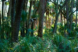 Florida forest images Florida trail tosohatchee florida hikes jpg