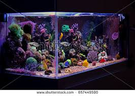 Reef Aquarium Lighting Reef Tank Stock Images Royalty Free Images U0026 Vectors Shutterstock