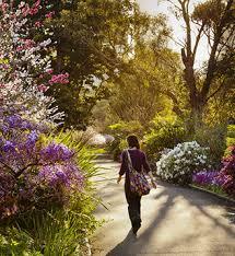 Botanic Garden Sydney The Royal Botanic Garden Sydney Adelphi Digital Consulting