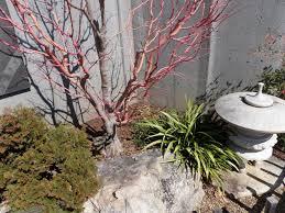 gardening ideas color in the winter garden art of stone gardening