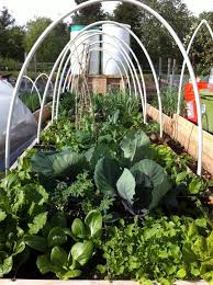 best 25 farmhouse watering and irrigation ideas on pinterest