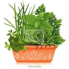 herbe cuisine jardin à litalienne de lherbe la cuisine méditerranéenne papier