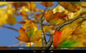 autumn leaves in hd gyro 3d parallax wallpaper android apps on
