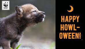 send an ecard send ecards world wildlife fund