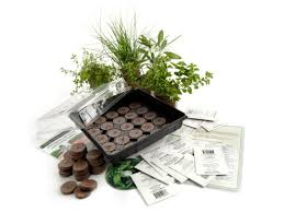 100 indoor herb garden kit with light meet a woman who