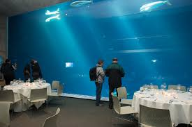 Aquarium For Home by Dazzling Interior Room Decoration Idea With Minimalist Furniture