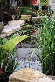 native uk pond plants pond plants which ones for your garden pond pond stars uk
