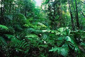 Tropical Rainforest Plant Species List - 35 facts of tropical rainforest conserve energy future