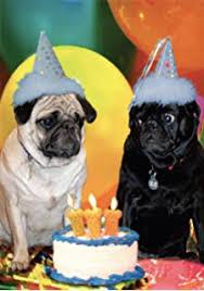 amazon com the pug factory dog humor birthday greeting card