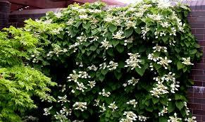 Flower Shrubs For Shaded Areas - native shrubs for shade carolyn u0027s shade gardens