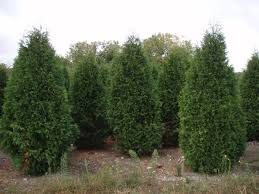 trees for sale dale tree movers tree farm dale tree movers
